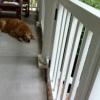 Pet Gate Plans Prove Popular