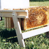 Build a Beekeeping Work Bench