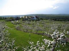 Everett farm apple orchard