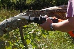 de-limbing fallen tree with reciprocating saw