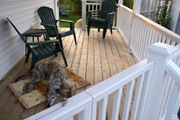 pet gates direct dogs to fenced yard